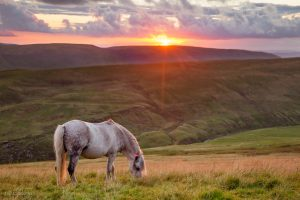 Horse on the slopes of Pen Y Fan.